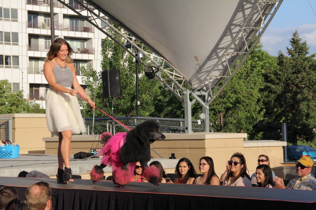 omaha furshion week dog fashion week